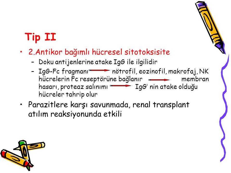 Tip II 2.Antikor bağımlı hücresel sitotoksisite –Doku antijenlerine atake IgG ile ilgilidir –IgG-Fc fragmanınötrofil, eozinofil, makrofaj, NK hücreler