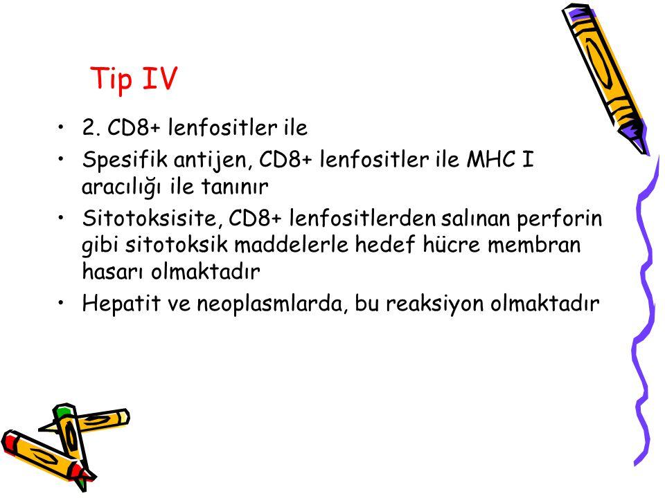 Tip IV 2. CD8+ lenfositler ile Spesifik antijen, CD8+ lenfositler ile MHC I aracılığı ile tanınır Sitotoksisite, CD8+ lenfositlerden salınan perforin