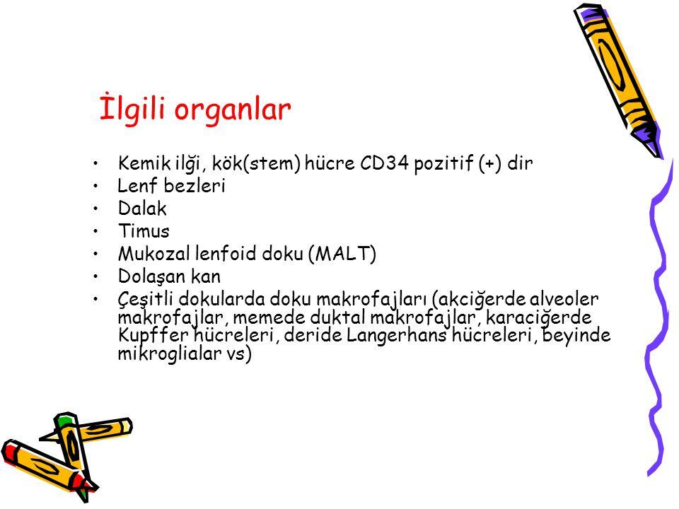 Histokampatibilite genleri (antijenleri) (MHC) (HLA) 6.
