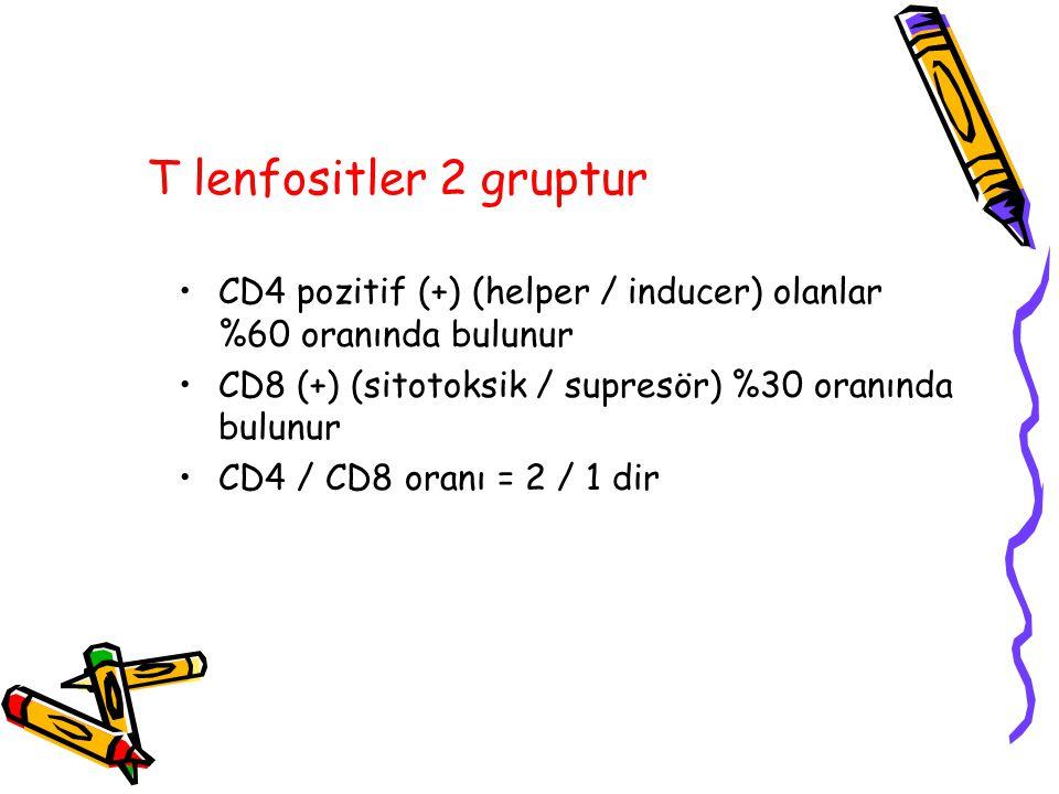 T lenfositler 2 gruptur CD4 pozitif (+) (helper / inducer) olanlar %60 oranında bulunur CD8 (+) (sitotoksik / supresör) %30 oranında bulunur CD4 / CD8