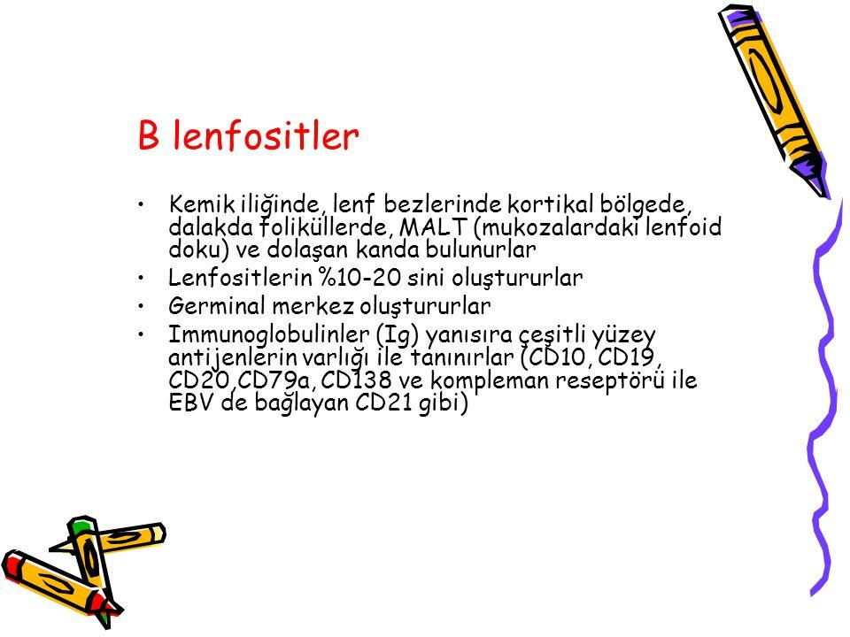 B lenfositler Kemik iliğinde, lenf bezlerinde kortikal bölgede, dalakda foliküllerde, MALT (mukozalardaki lenfoid doku) ve dolaşan kanda bulunurlar Le
