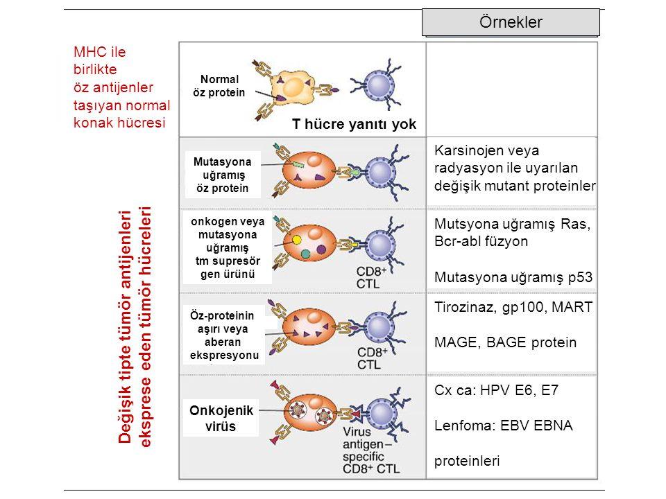Örnekler MHC ile birlikte öz antijenler taşıyan normal konak hücresi Değişik tipte tümör antijenleri eksprese eden tümör hücreleri Karsinojen veya rad