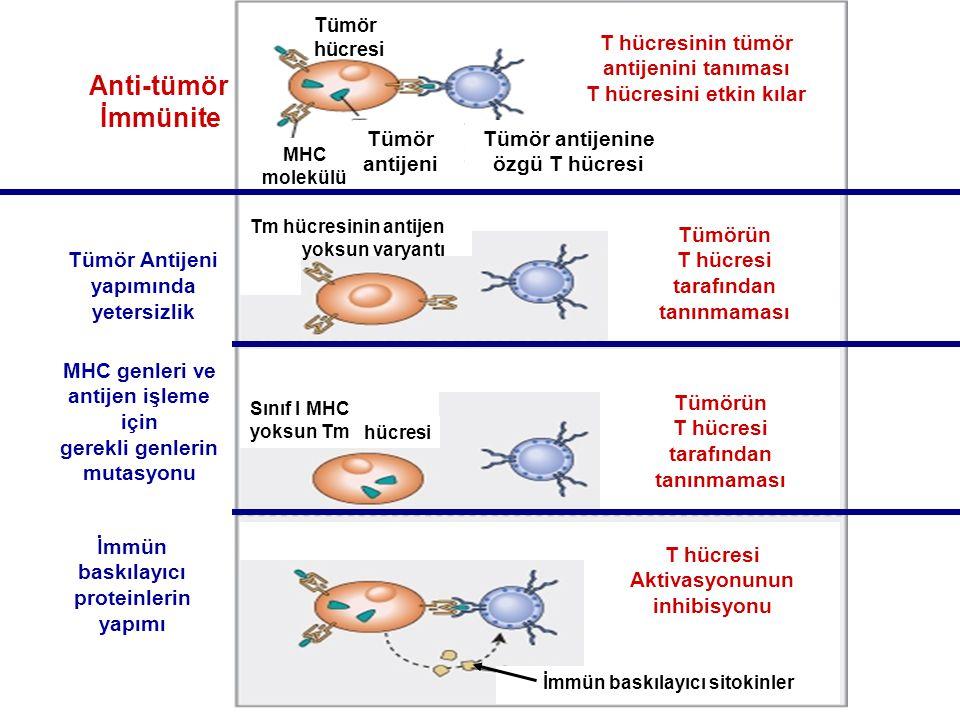 Tümör hücresi Tümör antijeni Tümör antijenine özgü T hücresi T hücresinin tümör antijenini tanıması T hücresini etkin kılar MHC molekülü Anti-tümör İm