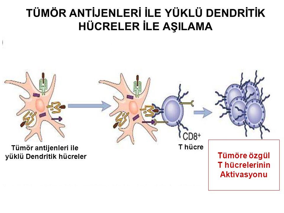 TÜMÖR ANTİJENLERİ İLE YÜKLÜ DENDRİTİK HÜCRELER İLE AŞILAMA Tümör antijenleri ile yüklü Dendritik hücreler T hücre Tümöre özgül T hücrelerinin Aktivasy