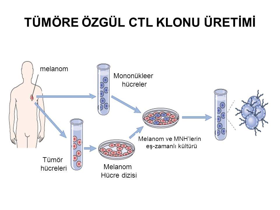 TÜMÖRE ÖZGÜL CTL KLONU ÜRETİMİ melanom Mononükleer hücreler Tümör hücreleri Melanom Hücre dizisi Melanom ve MNH'lerin eş-zamanlı kültürü