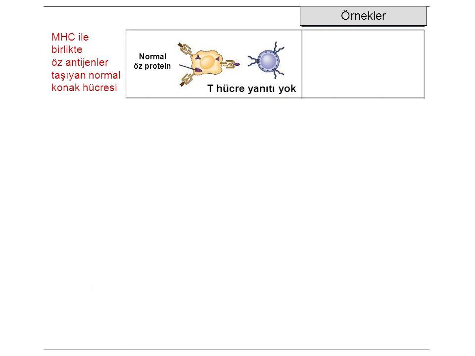 Örnekler MHC ile birlikte öz antijenler taşıyan normal konak hücresi Normal öz protein T hücre yanıtı yok