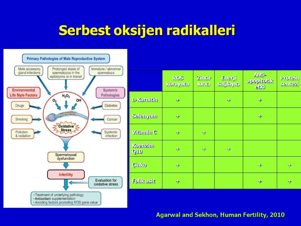 Serbest oksijen radikalleri Agarwal and Sekhon, Human Fertility, 2010 ROS koruyucu Zincir kırıcı Enerji sağlayıcı Anti- apopitotik etki Protein sentez