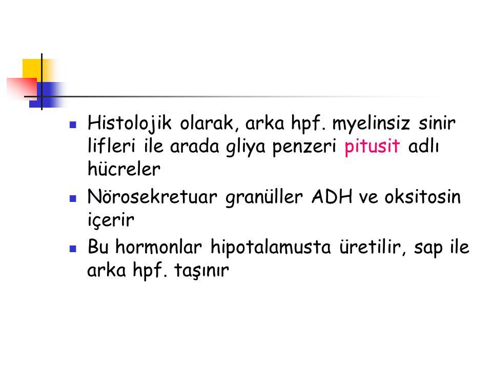 GH hücreli, seyrek granüllü- Akromegali, yoğun granüllü- Gigantizm PRL hücreli, seyrek granüllü- Amenore yoğun granüllü- Galaktore Kortikotrop hücreli, damla şeklinde periferik garnüllü- Cushing's Hastalığı, Hiperkortikolizm Nelson-Salasa, endomorfinler, pigmentasyon