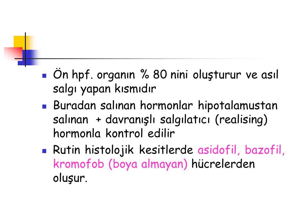 Ön hpf. organın % 80 nini oluşturur ve asıl salgı yapan kısmıdır Buradan salınan hormonlar hipotalamustan salınan + davranışlı salgılatıcı (realising)