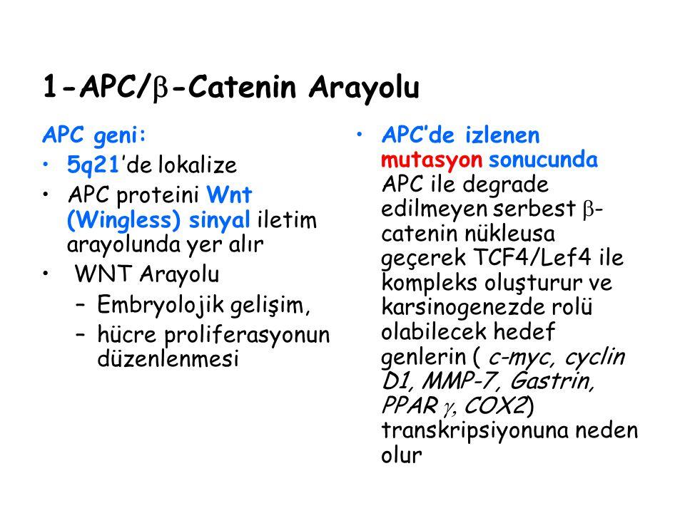 1-APC/  -Catenin Arayolu APC geni: 5q21'de lokalize APC proteini Wnt (Wingless) sinyal iletim arayolunda yer alır WNT Arayolu –Embryolojik gelişim, –