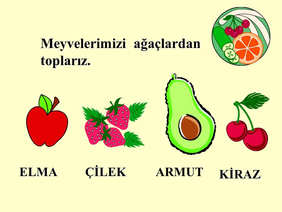 Sebzeleri daha çok pişirerek yeriz.Kabak, patlıcan, biber, havuç bazı sebzelerdir.