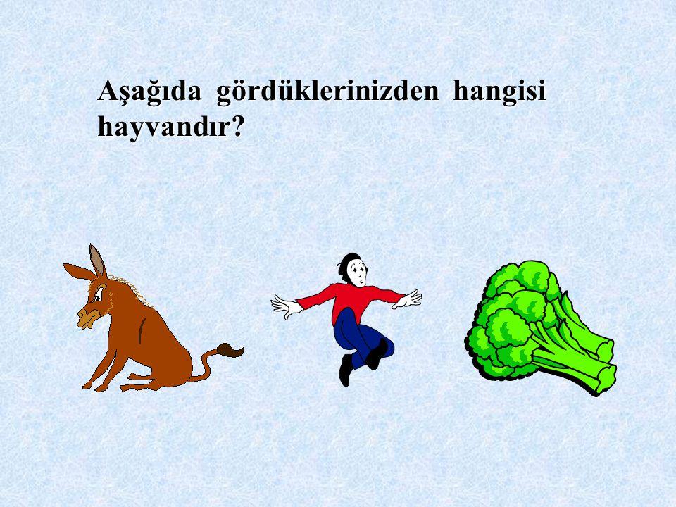 Aşağıda gördüklerinizden hangisi hayvandır?