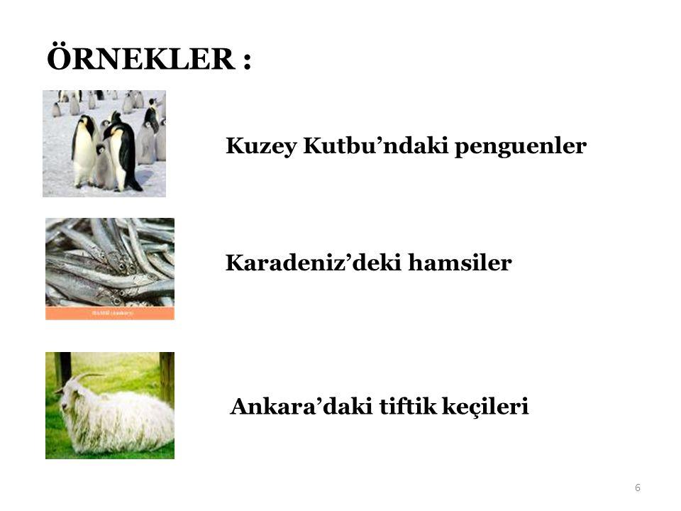 6 ÖRNEKLER : Kuzey Kutbu'ndaki penguenler Karadeniz'deki hamsiler Ankara'daki tiftik keçileri