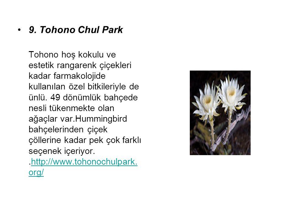 9. Tohono Chul Park Tohono hoş kokulu ve estetik rangarenk çiçekleri kadar farmakolojide kullanılan özel bitkileriyle de ünlü. 49 dönümlük bahçede nes