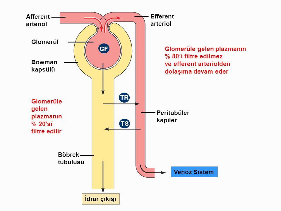 Afferent arteriol Efferent arteriol Glomerüle gelen plazmanın % 80'i filtre edilmez ve efferent arteriolden dolaşıma devam eder Glomerül Bowman kapsül