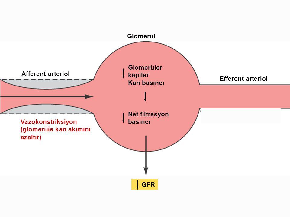 Vazokonstriksiyon (glomerüie kan akımını azaltır) Afferent arteriol Glomerül Efferent arteriol Glomerüler kapiler Kan basıncı Net filtrasyon basıncı G