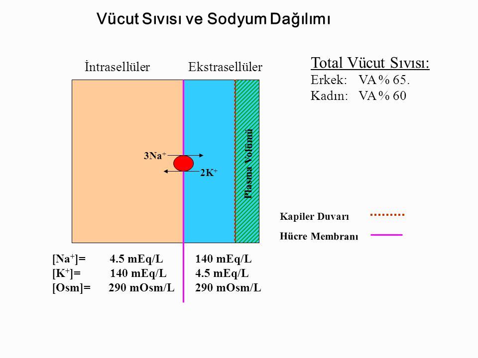 NaCl / ESS volüm / Arteriyal kan basıncı KCBöbrekAkciğer Adrenal korteks Böbrek H 2 O tutulur Na + (ve CI – ) Osmotik yolla ESS da H 2 O tutar Na + (ve CI – ) tutulur Tubulüslerde Na+ reabsorpsiyonu ( CI – reabsorpsiyonu Pasif olarak) Vasopressin Susama Arterioler Vazokonstrik.