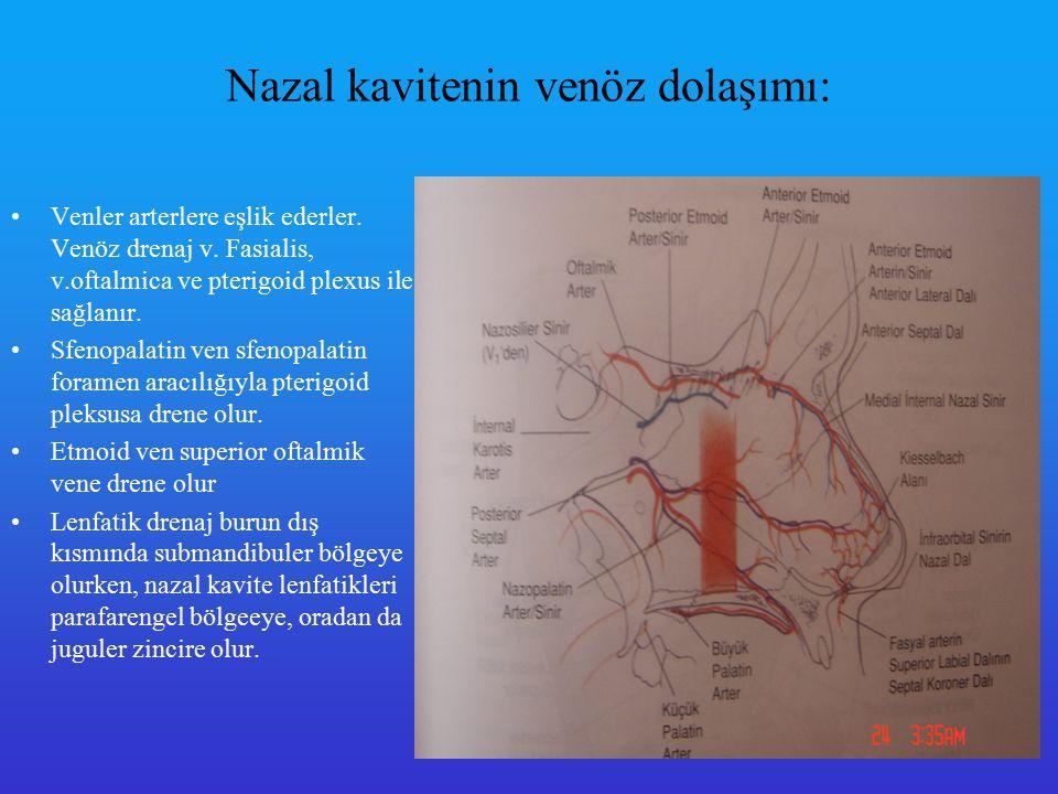 Nazal kavitenin innervasyonu Duysal inervasyonu trigeminusun 1.