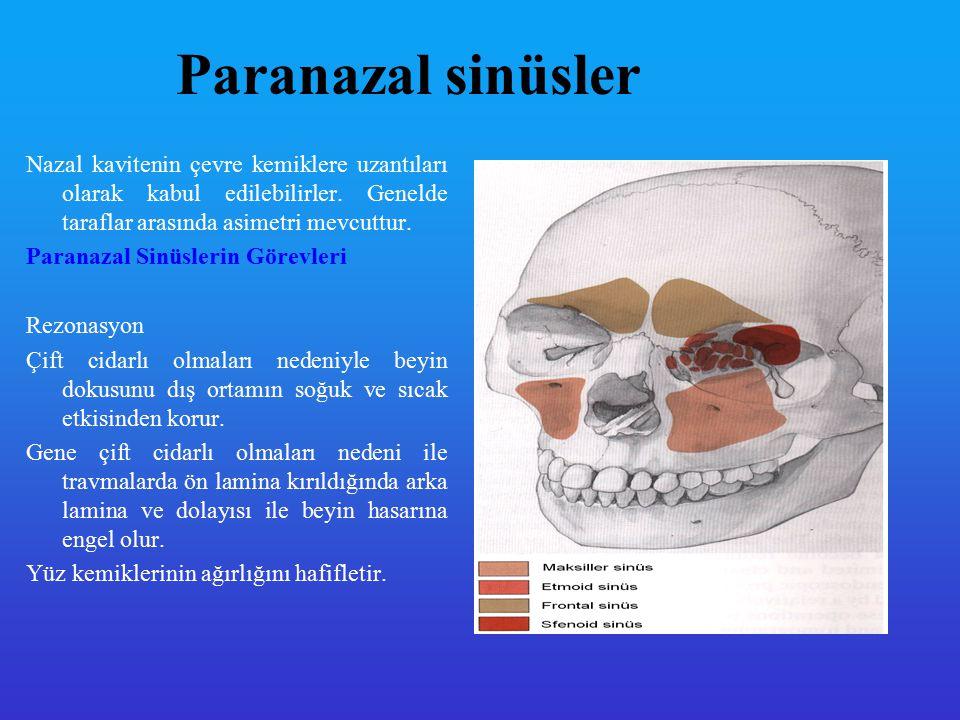 Burun fizyolojisi 1- SOLUNUM a-Solunum havasını şartlandırmak - Isıtma - Nemlendirme - Filtrasyon b- Solunum havası yoludur 2- Koku fonksiyonu 3- Rezonatör organ 4- Orta kulağın ventilasyonu 5- Paranazal sinüslerin boşalımı 6- Refleksler a- Hapşırık refleksi b- Isı regülasyon refleksi c- Nazo pulmoner refleks d- Nazal siklus 7- Tad alma ile beraber olan etkisi 8- Bakterisit bakteriostatik etki yapmak