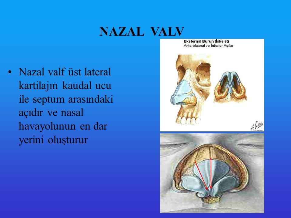 NAZAL TURBOLANS