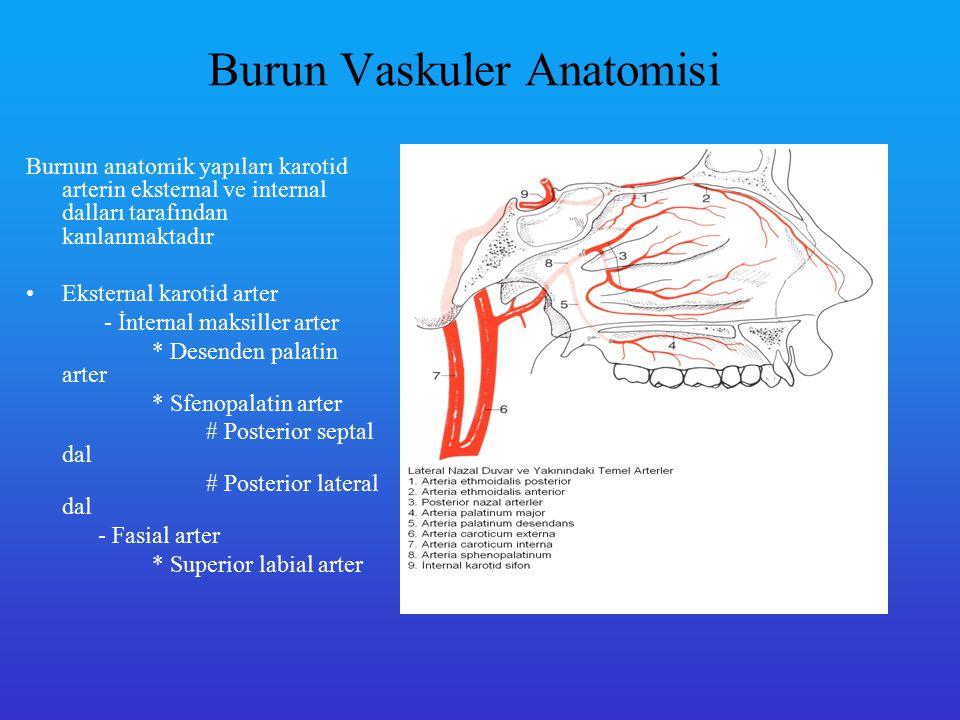 İnternal karotid arter -Oftalmik arter *Anterior etmoidal arter *Posterior etmoidal arter Superior septum ve superior lateral nazal duvar