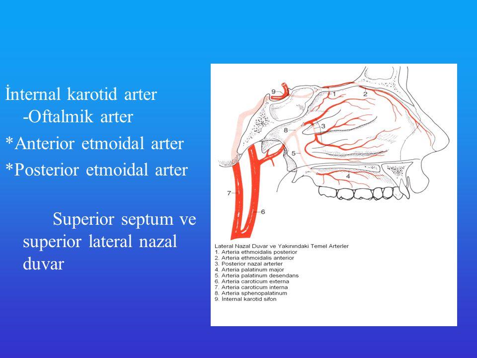 11-Sfenopalatin Arter Orta konkanın hemen arkasındaki sfenopalatin foramenden nazal kaviteye giriş yapar Alt ve orta konkalara, lateral nazal duvara kan sağlar Etmoidal arterler ile anastomoz yapar