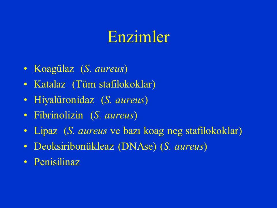 Enzimler Koagülaz (S. aureus) Katalaz (Tüm stafilokoklar) Hiyalüronidaz (S. aureus) Fibrinolizin (S. aureus) Lipaz (S. aureus ve bazı koag neg stafilo