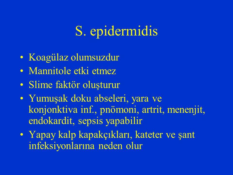 S. epidermidis Koagülaz olumsuzdur Mannitole etki etmez Slime faktör oluşturur Yumuşak doku abseleri, yara ve konjonktiva inf., pnömoni, artrit, menen