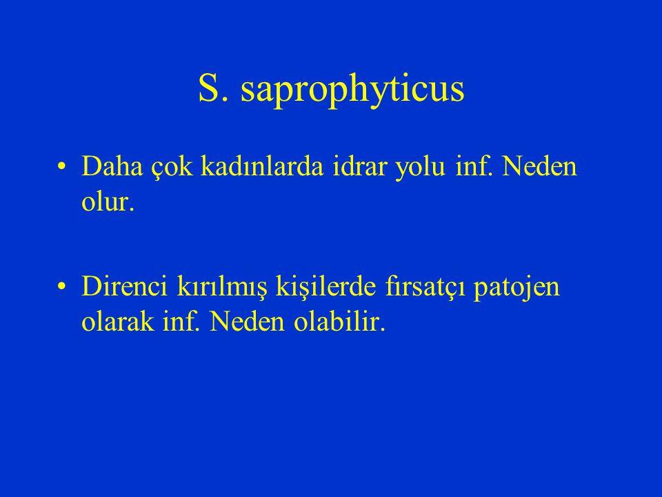 S. saprophyticus Daha çok kadınlarda idrar yolu inf. Neden olur. Direnci kırılmış kişilerde fırsatçı patojen olarak inf. Neden olabilir.