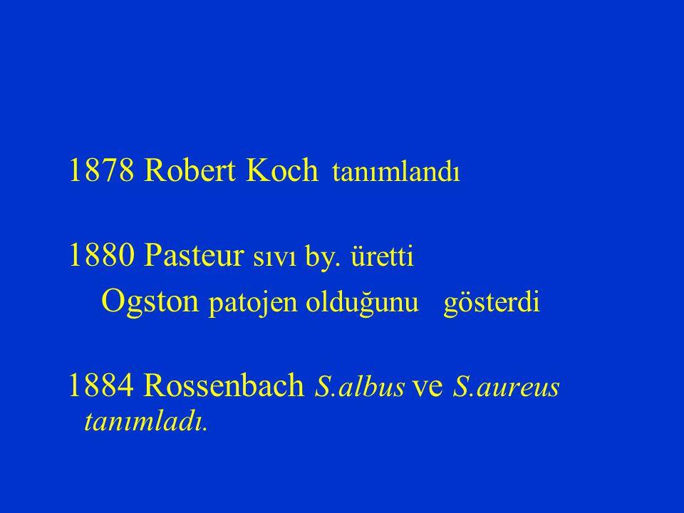 1878 Robert Koch tanımlandı 1880 Pasteur sıvı by. üretti Ogston patojen olduğunu gösterdi 1884 Rossenbach S.albus ve S.aureus tanımladı.