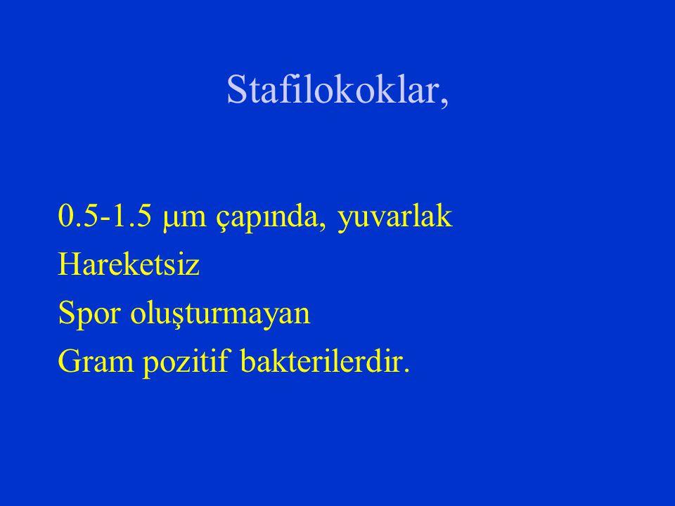 Eksfoliatif toksin S.