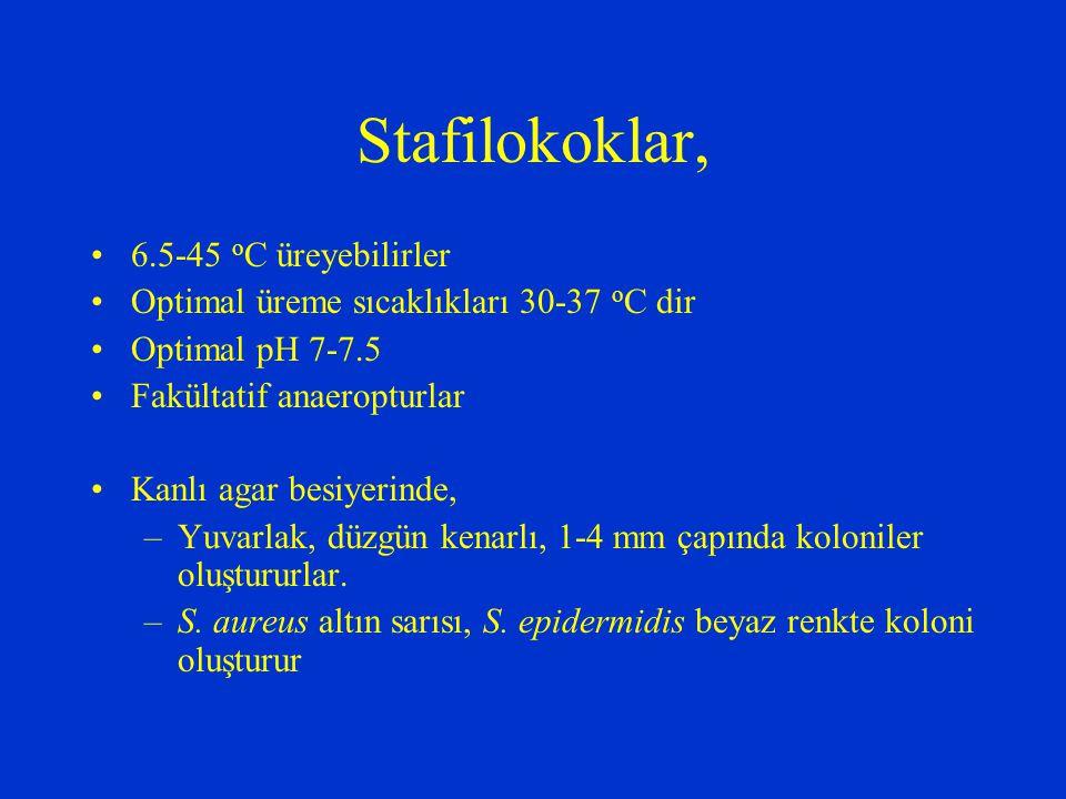 Enzimler Koagülaz (S.aureus) Katalaz (Tüm stafilokoklar) Hiyalüronidaz (S.