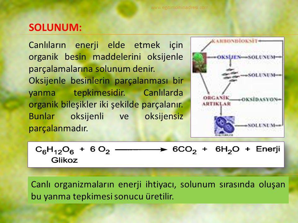 Canlıların enerji elde etmek için organik besin maddelerini oksijenle parçalamalarına solunum denir.