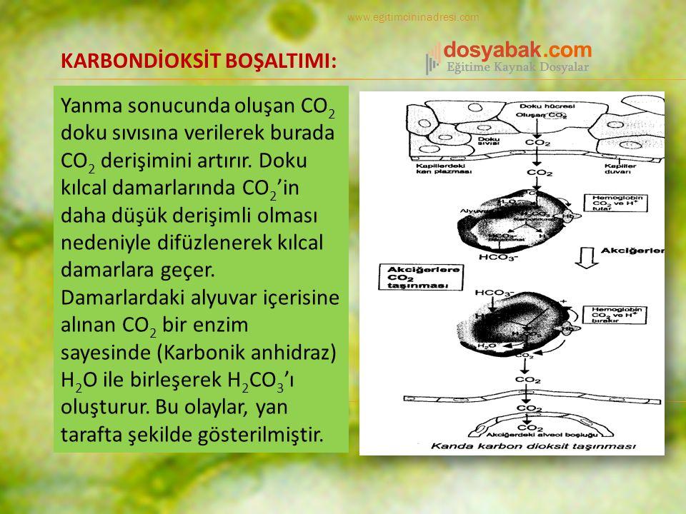 Yanma sonucunda oluşan CO 2 doku sıvısına verilerek burada CO 2 derişimini artırır.