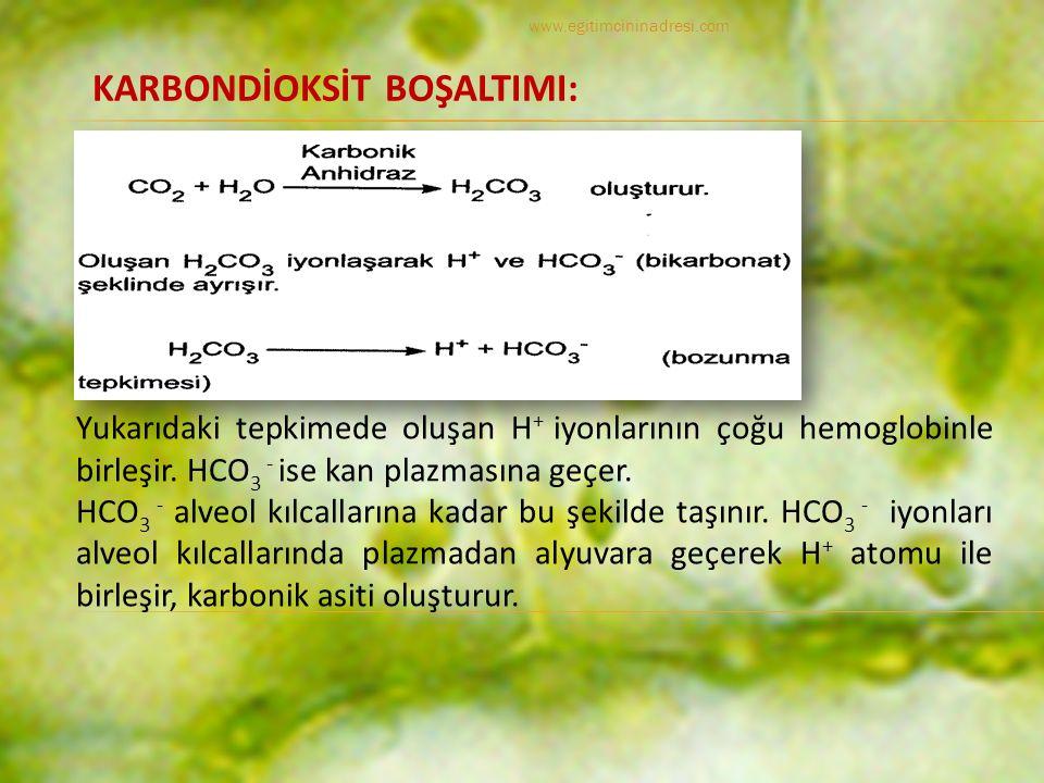 KARBONDİOKSİT BOŞALTIMI: Yukarıdaki tepkimede oluşan H + iyonlarının çoğu hemoglobinle birleşir.