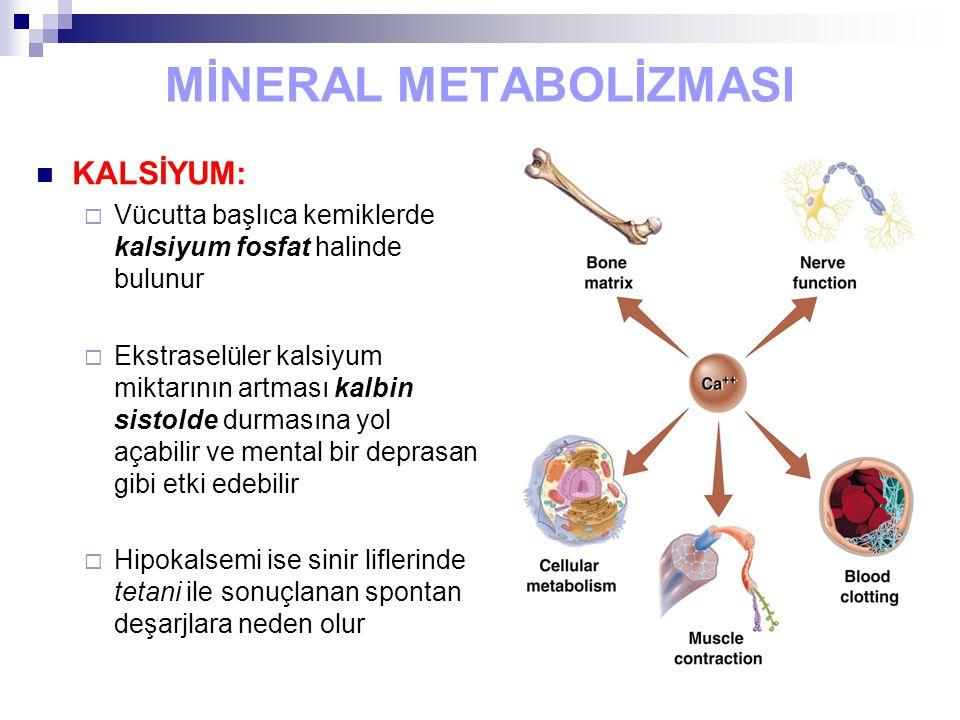 MİNERAL METABOLİZMASI KALSİYUM:  Vücutta başlıca kemiklerde kalsiyum fosfat halinde bulunur  Ekstraselüler kalsiyum miktarının artması kalbin sistol