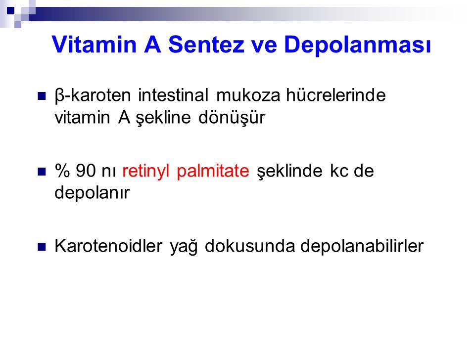 Vitamin A Sentez ve Depolanması β-karoten intestinal mukoza hücrelerinde vitamin A şekline dönüşür % 90 nı retinyl palmitate şeklinde kc de depolanır Karotenoidler yağ dokusunda depolanabilirler
