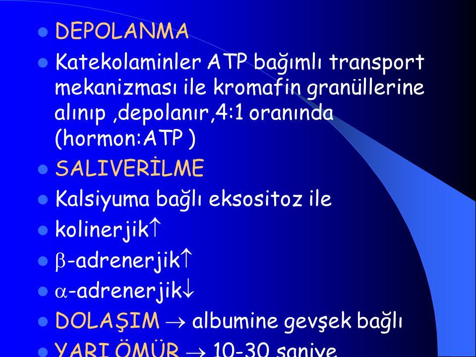 DEPOLANMA Katekolaminler ATP bağımlı transport mekanizması ile kromafin granüllerine alınıp,depolanır,4:1 oranında (hormon:ATP ) SALIVERİLME Kalsiyuma bağlı eksositoz ile kolinerjik   -adrenerjik   -adrenerjik  DOLAŞIM  albumine gevşek bağlı YARI ÖMÜR  10-30 saniye