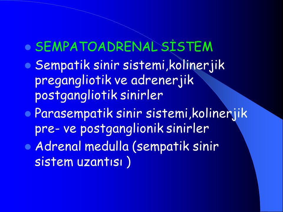 SEMPATOADRENAL SİSTEM Sempatik sinir sistemi,kolinerjik pregangliotik ve adrenerjik postgangliotik sinirler Parasempatik sinir sistemi,kolinerjik pre-