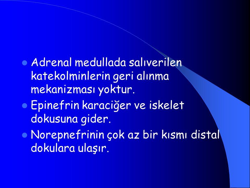 Adrenal medullada salıverilen katekolminlerin geri alınma mekanizması yoktur. Epinefrin karaciğer ve iskelet dokusuna gider. Norepnefrinin çok az bir