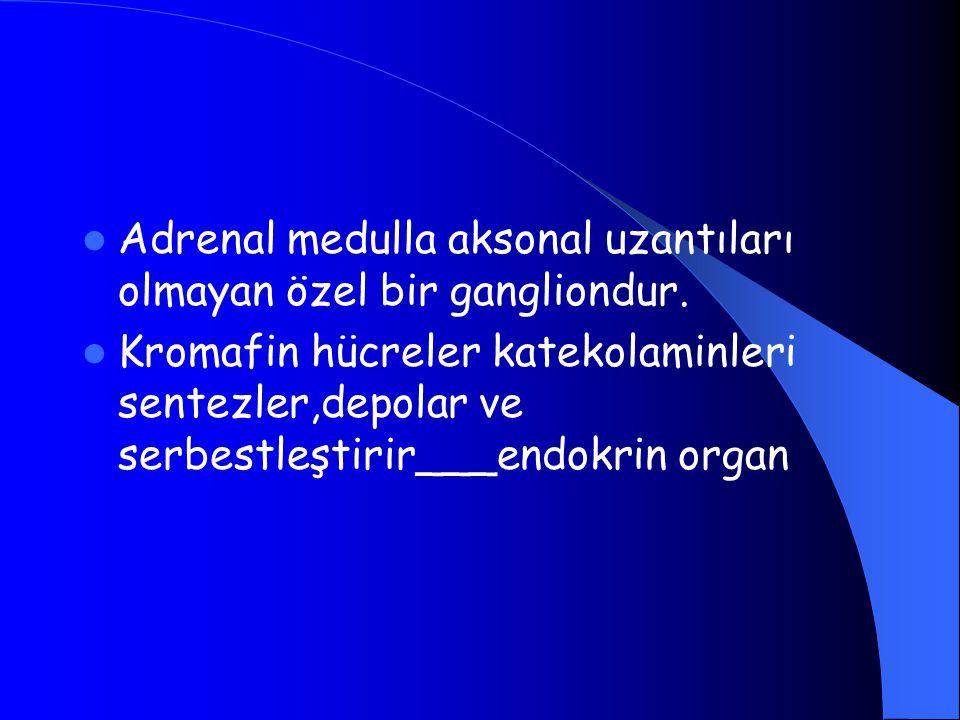Adrenal medulla aksonal uzantıları olmayan özel bir gangliondur. Kromafin hücreler katekolaminleri sentezler,depolar ve serbestleştirir___endokrin org