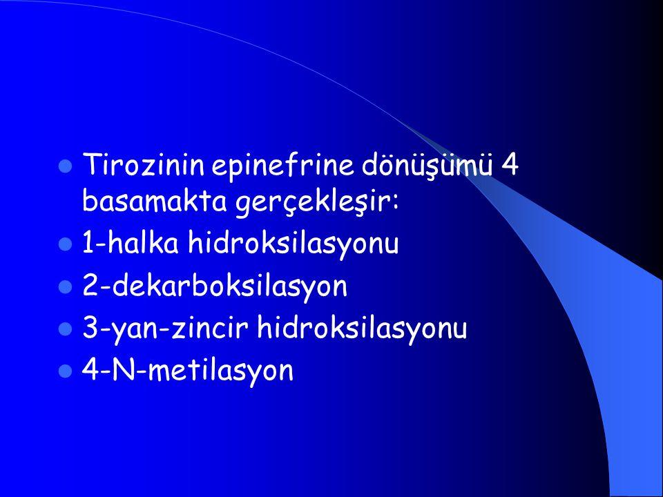 Tirozinin epinefrine dönüşümü 4 basamakta gerçekleşir: 1-halka hidroksilasyonu 2-dekarboksilasyon 3-yan-zincir hidroksilasyonu 4-N-metilasyon