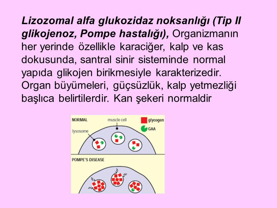 Lizozomal alfa glukozidaz noksanlığı (Tip II glikojenoz, Pompe hastalığı), Organizmanın her yerinde özellikle karaciğer, kalp ve kas dokusunda, santra
