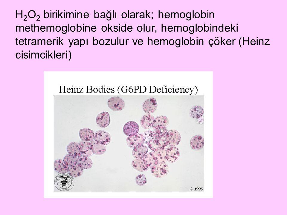 H 2 O 2 birikimine bağlı olarak; hemoglobin methemoglobine okside olur, hemoglobindeki tetramerik yapı bozulur ve hemoglobin çöker (Heinz cisimcikleri