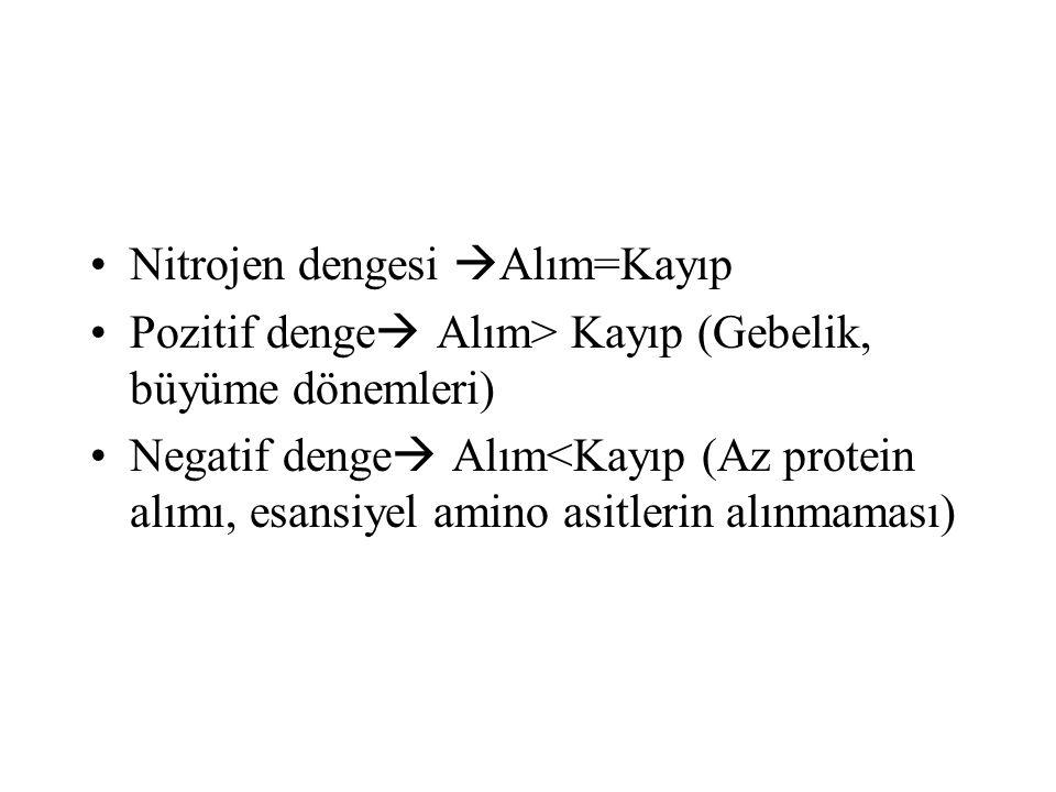 Nitrojen dengesi  Alım=Kayıp Pozitif denge  Alım> Kayıp (Gebelik, büyüme dönemleri) Negatif denge  Alım<Kayıp (Az protein alımı, esansiyel amino as