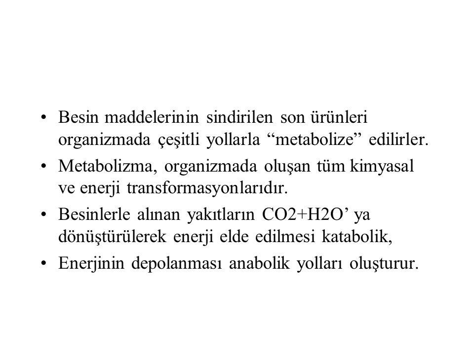 Besinlerin katabolizması sonucu açığa çıkan enerji, çeşitli işlevler için kullanılır (iş) ya da depolanır.