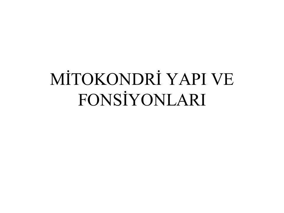 MİTOKONDRİ YAPI VE FONSİYONLARI