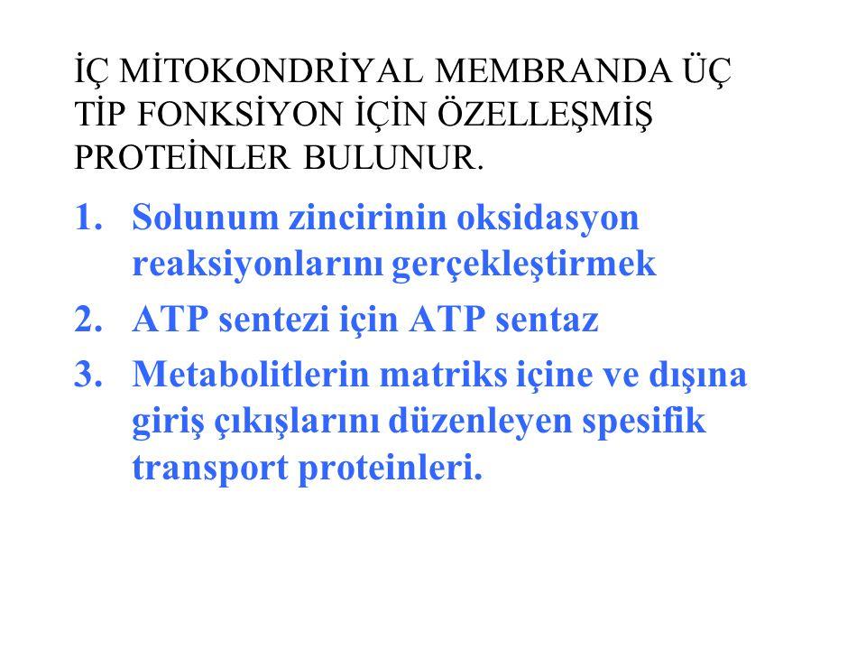 İÇ MİTOKONDRİYAL MEMBRANDA ÜÇ TİP FONKSİYON İÇİN ÖZELLEŞMİŞ PROTEİNLER BULUNUR. 1.Solunum zincirinin oksidasyon reaksiyonlarını gerçekleştirmek 2.ATP