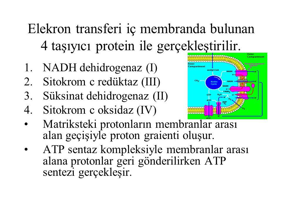 Elekron transferi iç membranda bulunan 4 taşıyıcı protein ile gerçekleştirilir. 1.NADH dehidrogenaz (I) 2.Sitokrom c redüktaz (III) 3.Süksinat dehidro