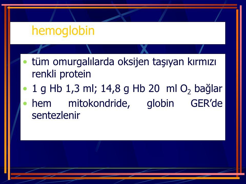 hemoglobin tüm omurgalılarda oksijen taşıyan kırmızı renkli protein 1 g Hb 1,3 ml; 14,8 g Hb 20 ml O 2 bağlar hem mitokondride, globin GER'de sentezle